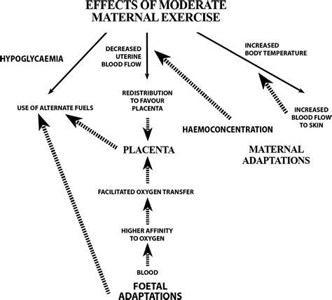 exercise  pregnancy  recreational  elite athletes