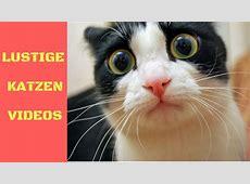 ListeTop10 Lustige Katzen Videos zum Totlachen Lustige
