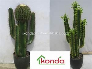 Cactus Sans Epine : vente cactus mexicain ~ Melissatoandfro.com Idées de Décoration