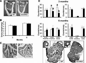 Ovary And Uterus Phenotype  Ovary Weight  And Ovarian