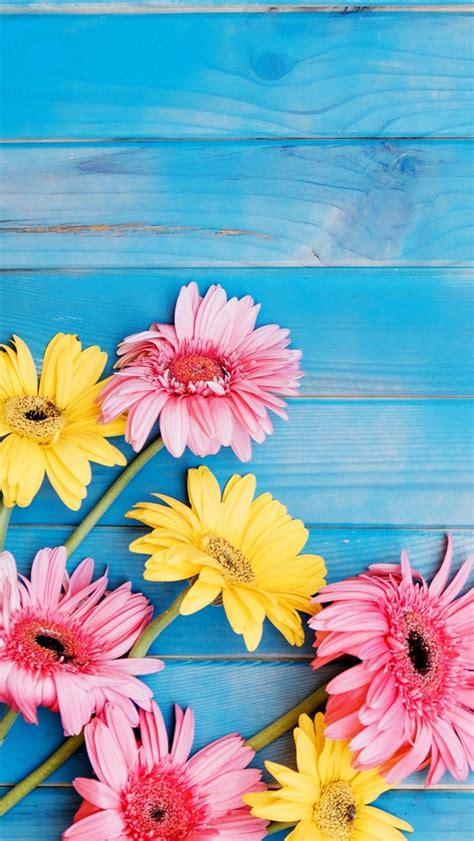fondos de pantalla flores amarillas  rosadas del gerbera