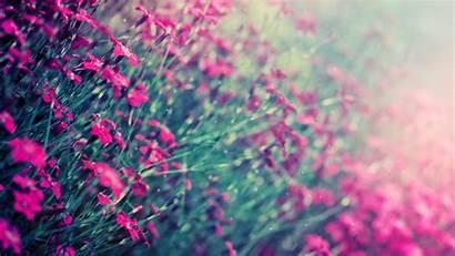 Pink Wallpapers Pixelstalk