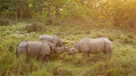 752 one-horned rhinos in Nepal determined by the National ...