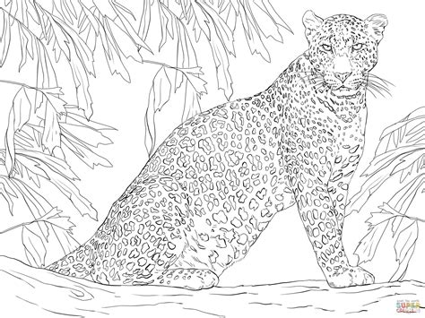 Leopard Sitting on Tree Super Coloring Animal coloring