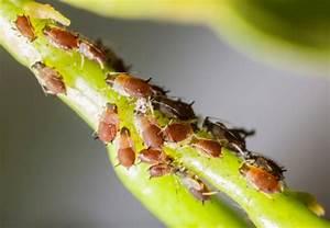Schädlinge Im Garten : nutzpflanzen vor sch dlingen sch tzen tipps von obi ~ Lizthompson.info Haus und Dekorationen