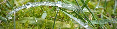 Moos Im Rasen Bekaempfen by Moos Im Rasen Warum Es Sich Bildet Und Wie Sie Es Bek 228 Mpfen