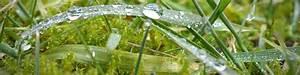 Rasen Düngen Wässern : moos im rasen warum es sich bildet und wie sie es bek mpfen ~ Markanthonyermac.com Haus und Dekorationen