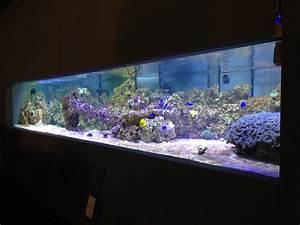 Liter Berechnen Aquarium : aquarium kosten strom private aquarien homepage hans beckmann oberndorf ~ Themetempest.com Abrechnung
