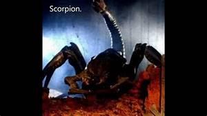 Starship Troopers Arachnids. - YouTube