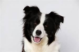 Mietwohnung Mit Hund : welcher hund passt zu mir die 12 besten tipps test ~ Lizthompson.info Haus und Dekorationen