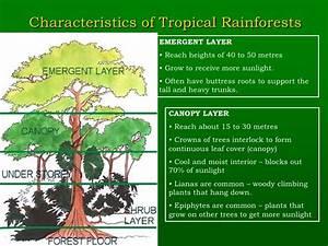 Chapter 12 Natural Vegetation