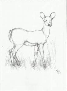 Easy Animal Sketches In Pencil - Drawing Of Sketch
