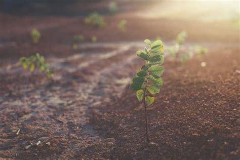 green leafy plant starting  grow  beige racks