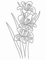 Coloring Gladiolus Pages Flower Flowers Bulb Plant Sketch Template Recommended sketch template