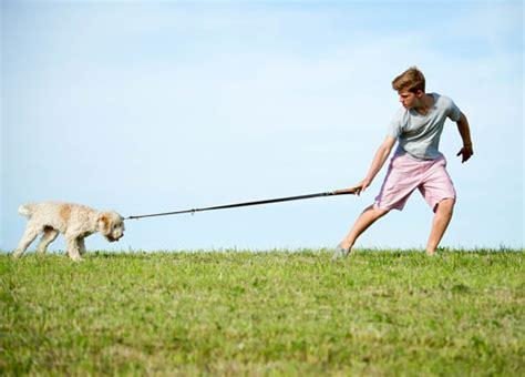 leinenfuehrigkeit die besten wege hunde