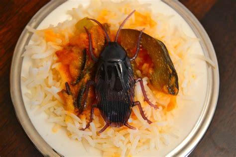 cafards cuisine defi insecte cafard grillé avec du riz et une sauce au curry poivron vert aubergine