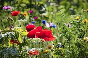 Blumen Im Sommer : blumen sommer das beste aus wohndesign und m bel inspiration ~ Whattoseeinmadrid.com Haus und Dekorationen