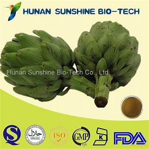 Artichoke Leaf Extract Products China Artichoke Leaf Extract Supplier
