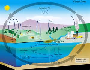 carbon cycle diagram from nasa ucar center for science education