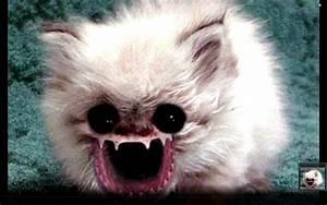 Worlds ugliest cat - YouTube