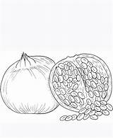 Coloring Pomegranate Seeds Pages Seed Pumpkin Template Printable Getcolorings sketch template
