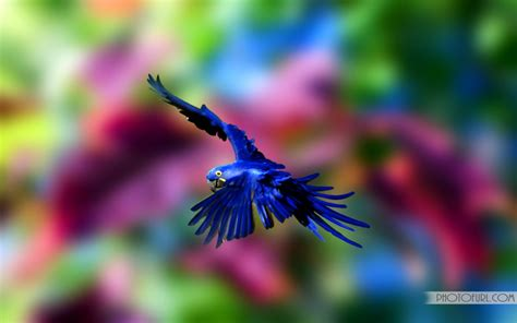 colorful parrot hd wallapaper  wallpapers