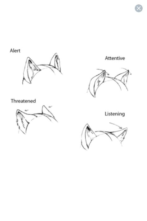 ear expressions furryanthro tutorials drawings art