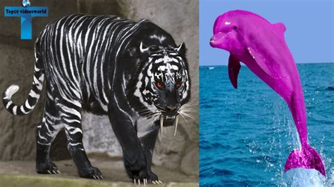 Top 10 Animals With The Most Unique Color Mutations on