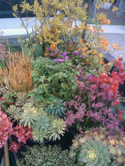 drought tolerant plants australia all drought tolerant plants yelp