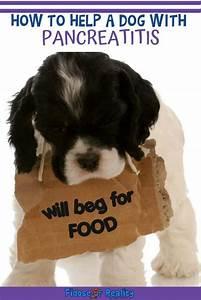 How To Help A Dog With Pancreatitis