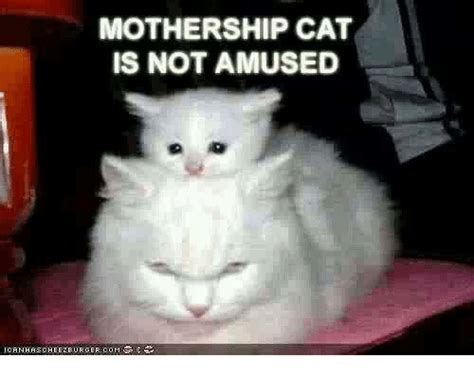 Unamused Cat Meme - mothership cat is not amused ica n has ch e e z burgercom meme on sizzle