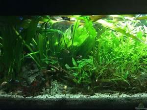 Pflanzen Im Aquarium : pflanzen im aquarium gr nes paradies aus gr nes paradies ~ Michelbontemps.com Haus und Dekorationen
