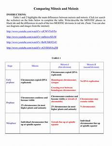 Biology Comparing Mitosis And Meiosis Worksheet Answers