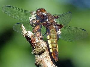 Damselfly And Dragonfly Pictures