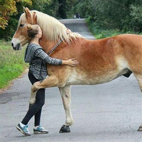 wie bring man einem pferd pony diesen trick bei pferde