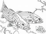 Fishing Coloring Pole Pages Bass Largemouth Rod Pro Getdrawings Fish Printable Getcolorings sketch template