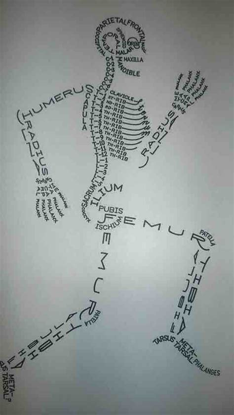 cool way to teach about the spine make reddit gallery skeleton drawn using bone names cartoons pinterest skeletons names and