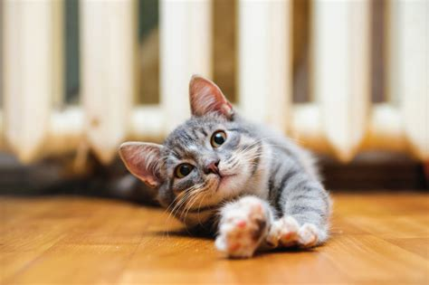 signs  illness  cats cat health cats guide