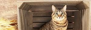 L Art De La Caisse : comment cr er un panier pour mon animal de compagnie l ~ Carolinahurricanesstore.com Idées de Décoration