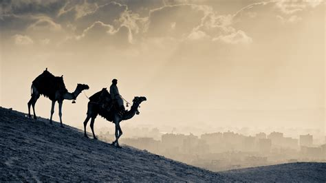 desert sunset   camel ride animal hd wallpaper