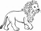 Lion Coloring Pages Lions sketch template