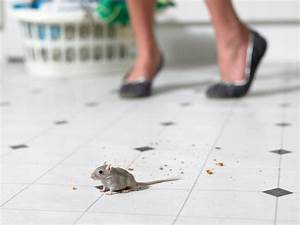 how to keep mice out of your kitchen exterminatorhamiltonca With mice in between floors