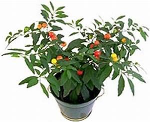 Pflege Von Zimmerpflanzen : tipps tricks richtige pflege von zimmerpflanzen philognosie ~ Markanthonyermac.com Haus und Dekorationen