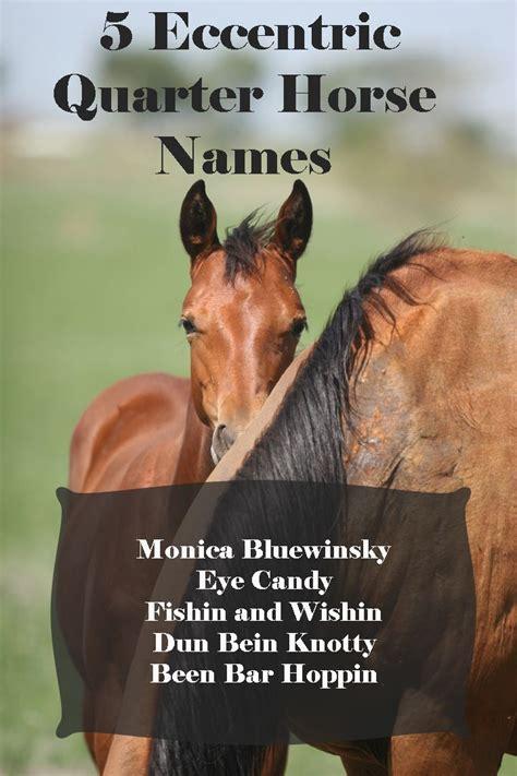 names fun horse horses quarter favorite eccentric registration foal funny any know department crazy aqha