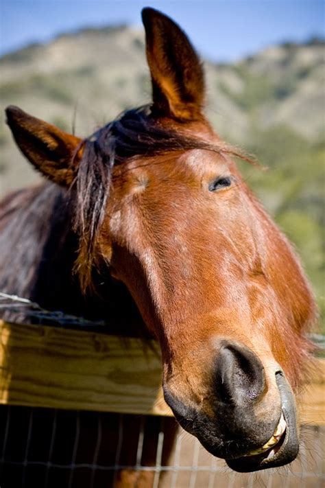horse funny face happy smile humor captions horses animals having cute wednesday very friday november sense tell kid something let