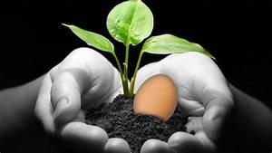 Como cuidar las plantas con cascara de huevo for Como mantener las plantas con cascaras de huevo
