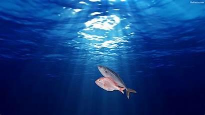 Fish Baltana