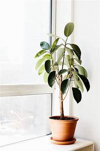 Green Thumb: Our Favorite Indoor Plants to Grow In Your ...