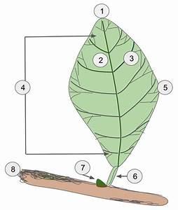 File Leaf Diagram Svg