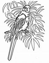 Parrot Coloring Pages Tropical Bird Realistic Hawaii Female Beach Colouring Parrots Printable Animal Grown Ups Getcolorings Template sketch template